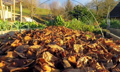 couche de feuilles sur jardin