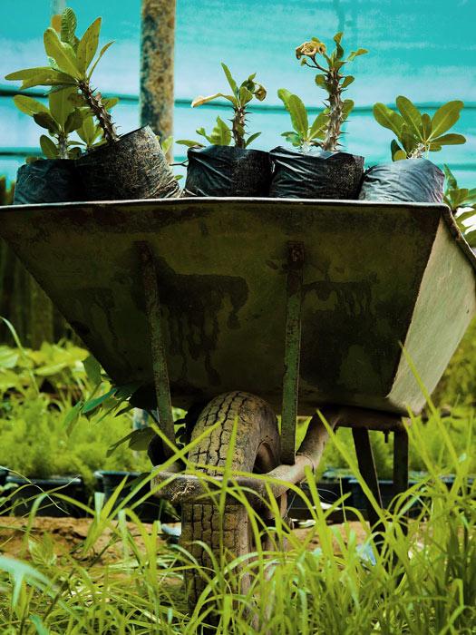 brouette de plants