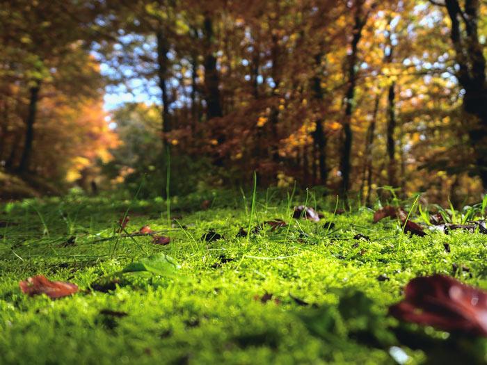 Sol forestier dense sans motoculteur