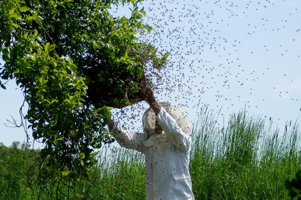 Apiculteur posant une ruchette