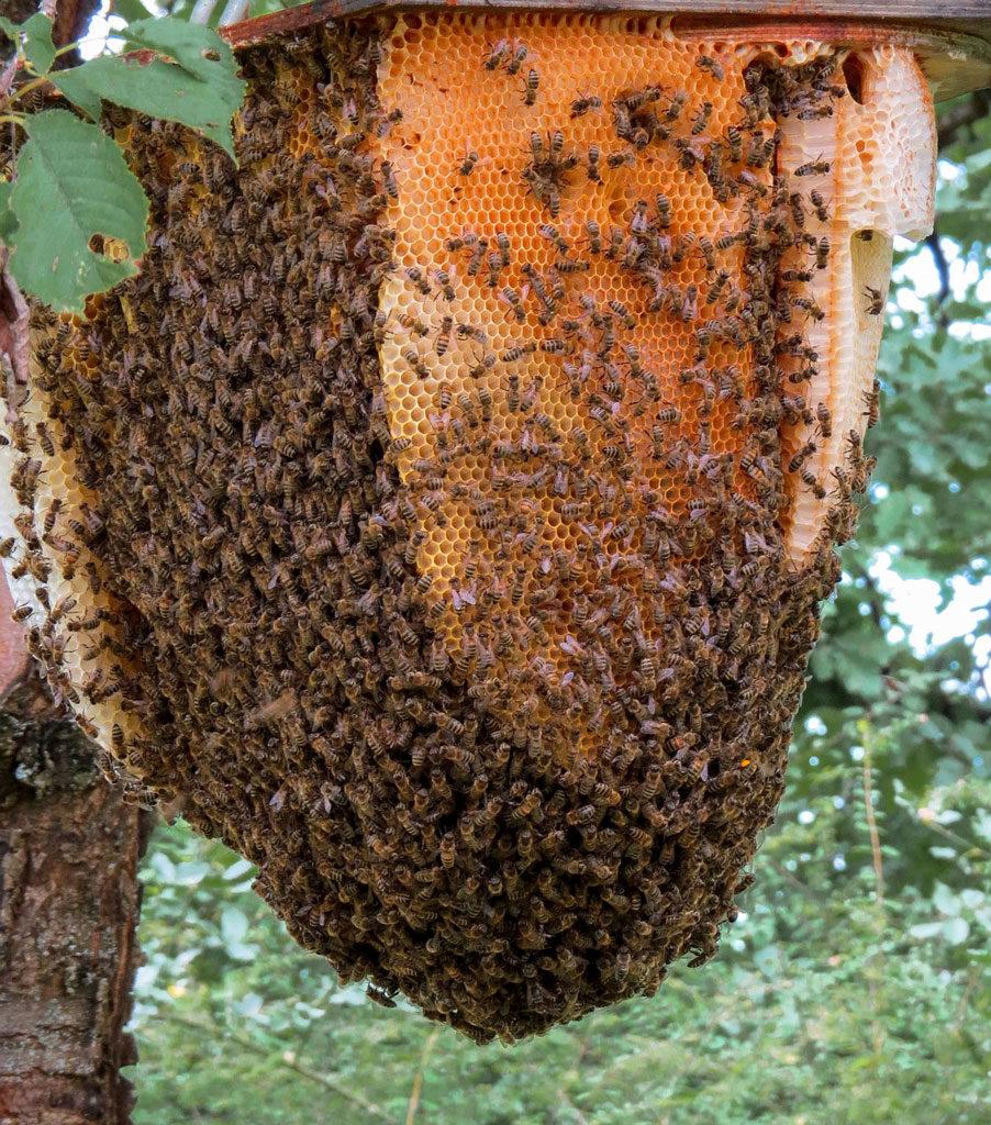 Gâteau de cire, nid abeilles