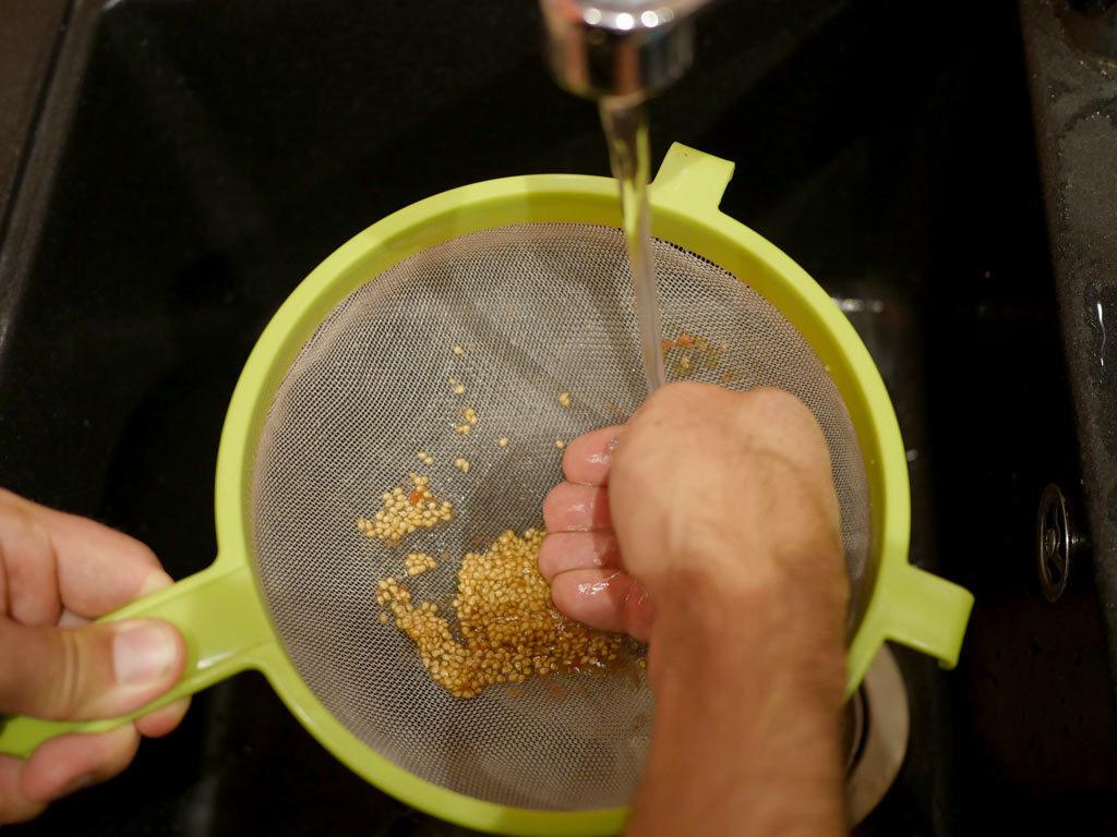 Lavage des graines de tomates à l'eau