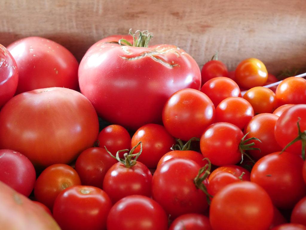 Tomates roses généreuses