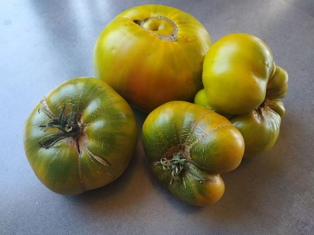 variété tomate malakhitovaya