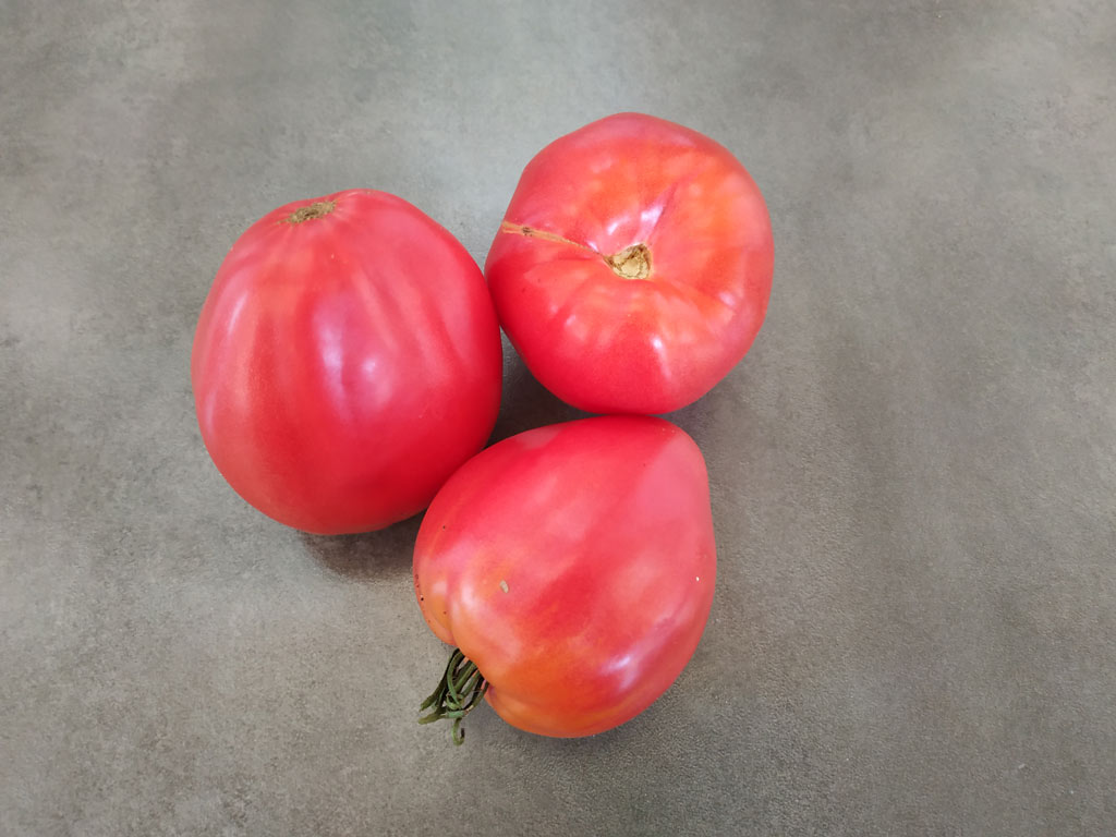 tomate red german strawberry