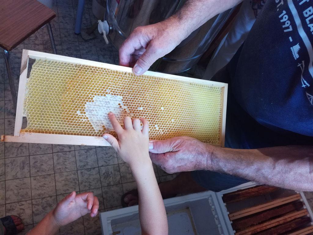 Cadre de hausse avec du miel