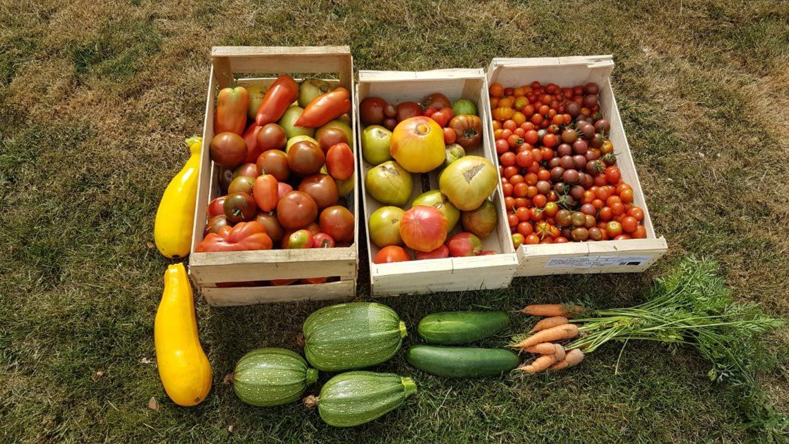 Autosuffisance en légumes au potager