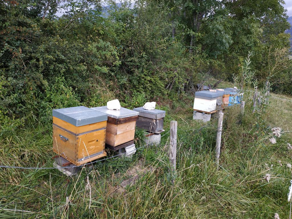 Ruches d'abeilles au rucher