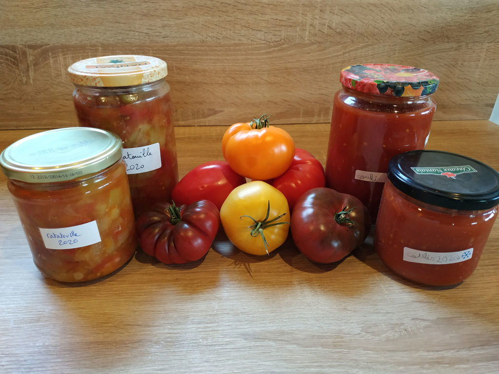 Transformation des tomates du jardin en coulis de tomates et en ratatouille