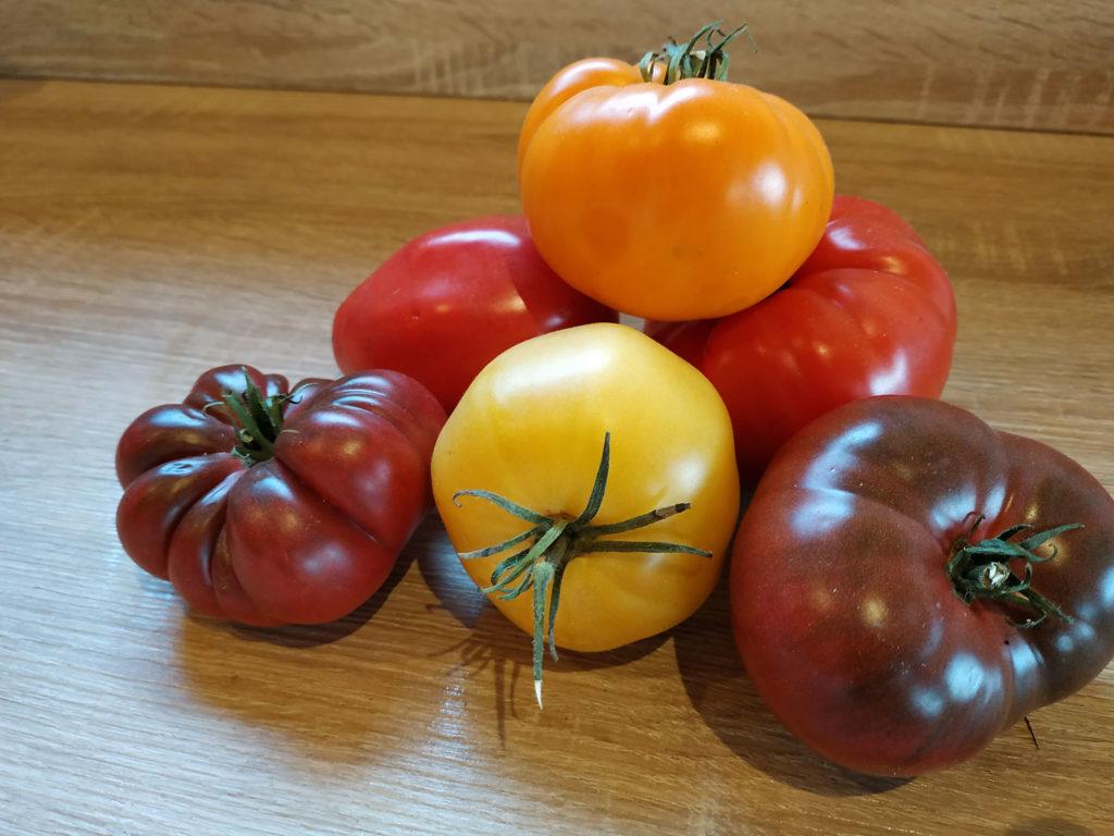 Quelques tomates du jardin potager.